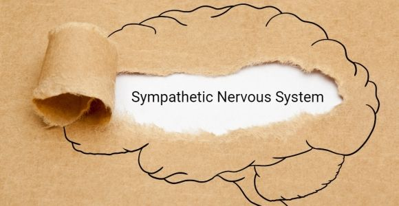 Stress and the Sympathetic Nervous System