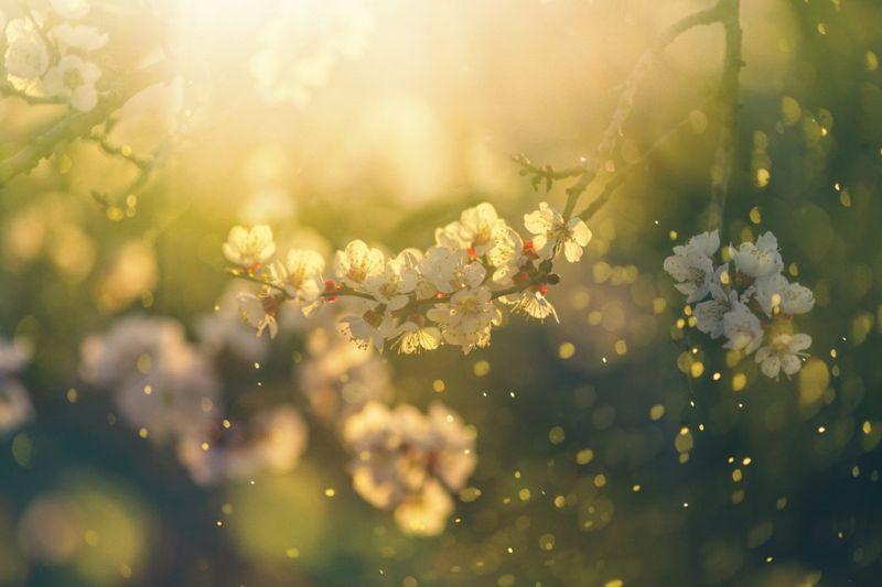 pollen environmental reaction