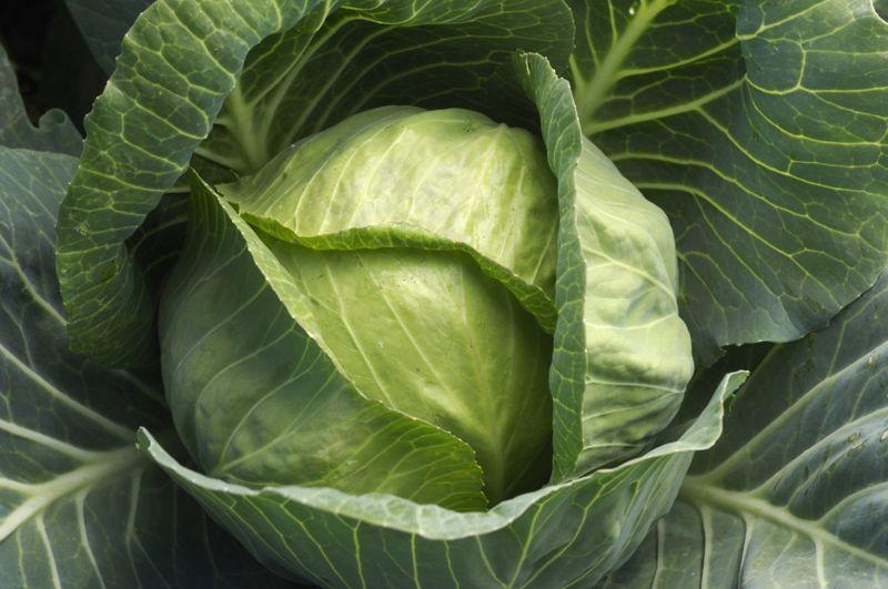 cabbage vitamin K blood clotting