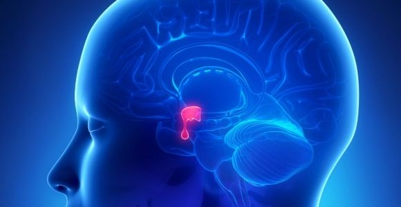Effects and Dangers of Pituitary Gland Conditions
