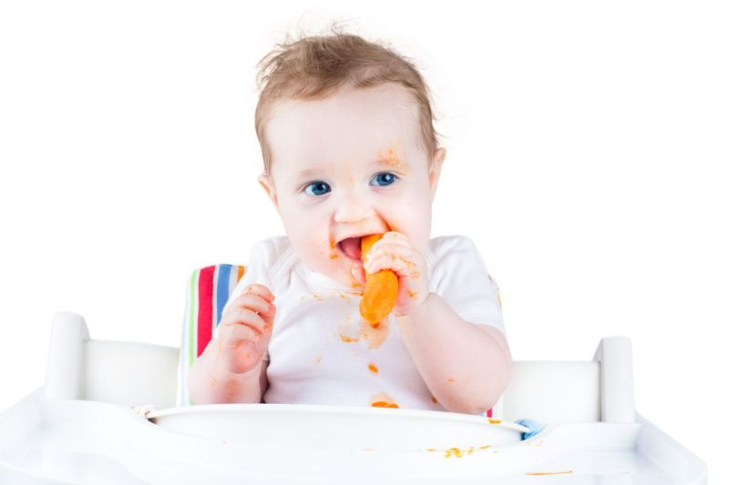 carrot feeding nutrition