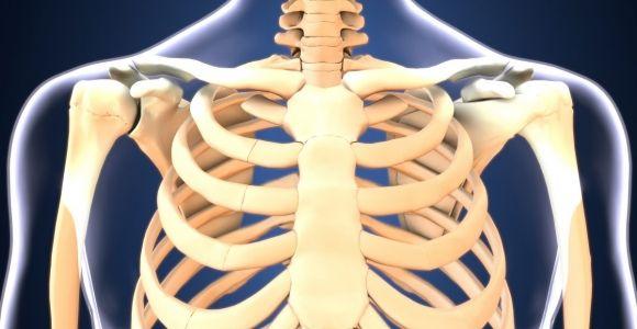 Anatomy of the Sternum