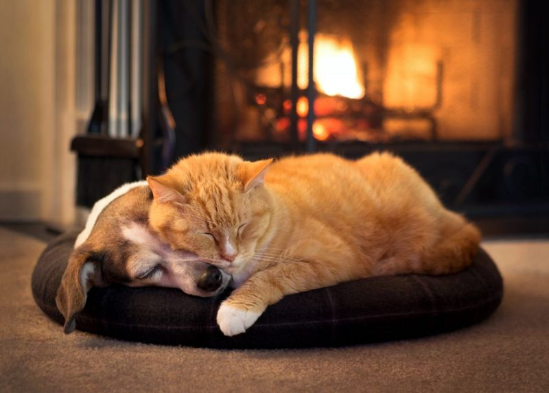 felines normal canines issues napping