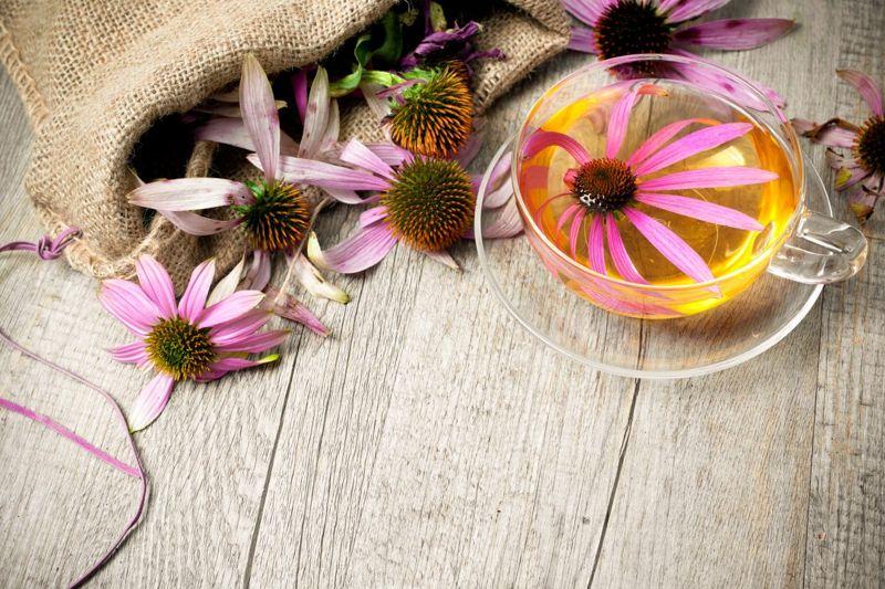 echinacea tea flowers