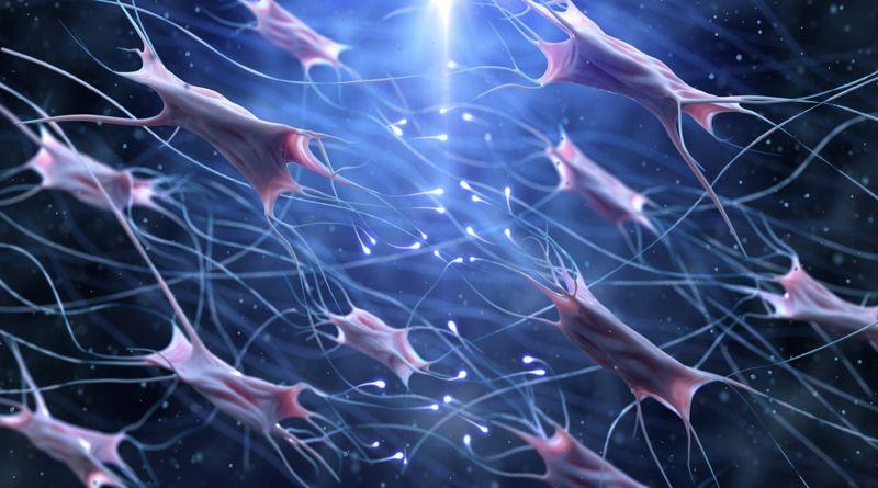 primary cells healing dermal fibroblasts