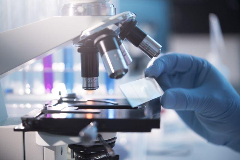 microscope slide mite sample