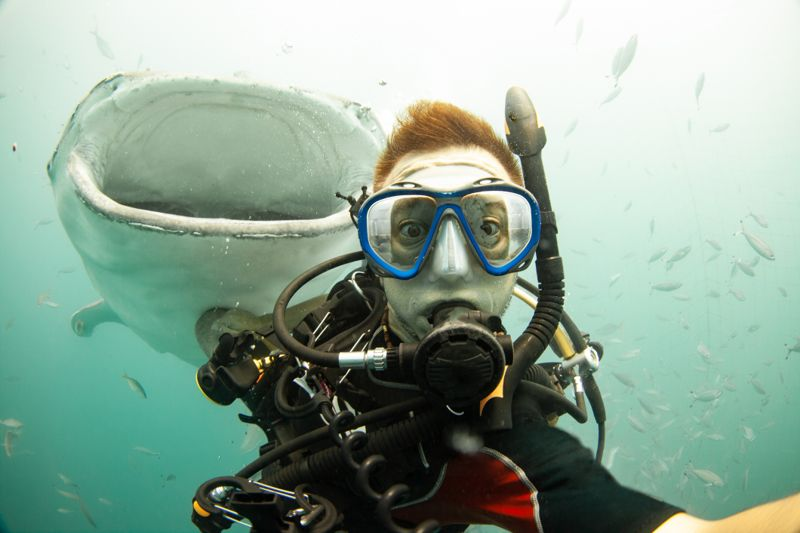 Underwater selfie with a Whale shark swimming up from behind.