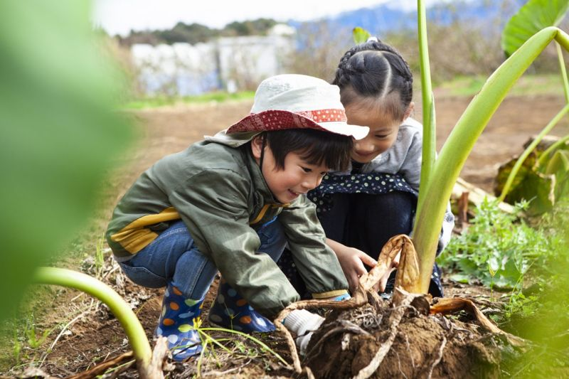 horticultural science concentration gardening children