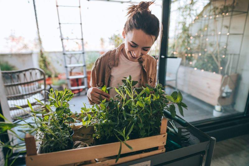 emotional well being leisure gardening