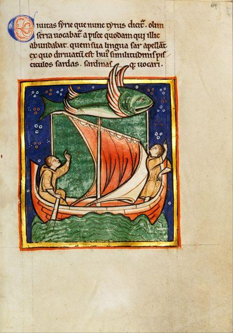 Sawfish and Ship