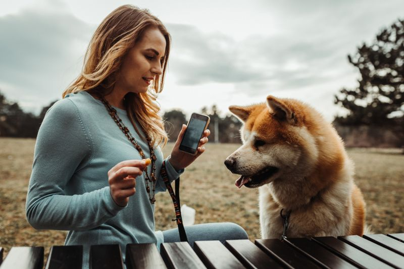 Young woman using smart phone and teaching Japanese Akita dog obedience tricks