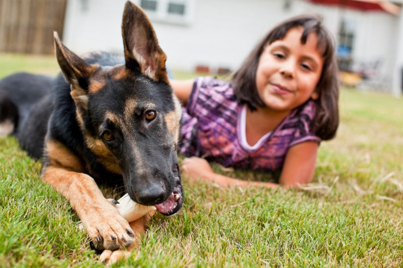 German Shepherd puppy with her owner laying on the grass.