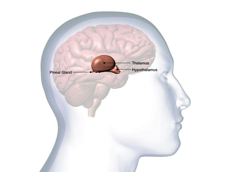 encephalopathy thalamus hypothalamus brain thiamin