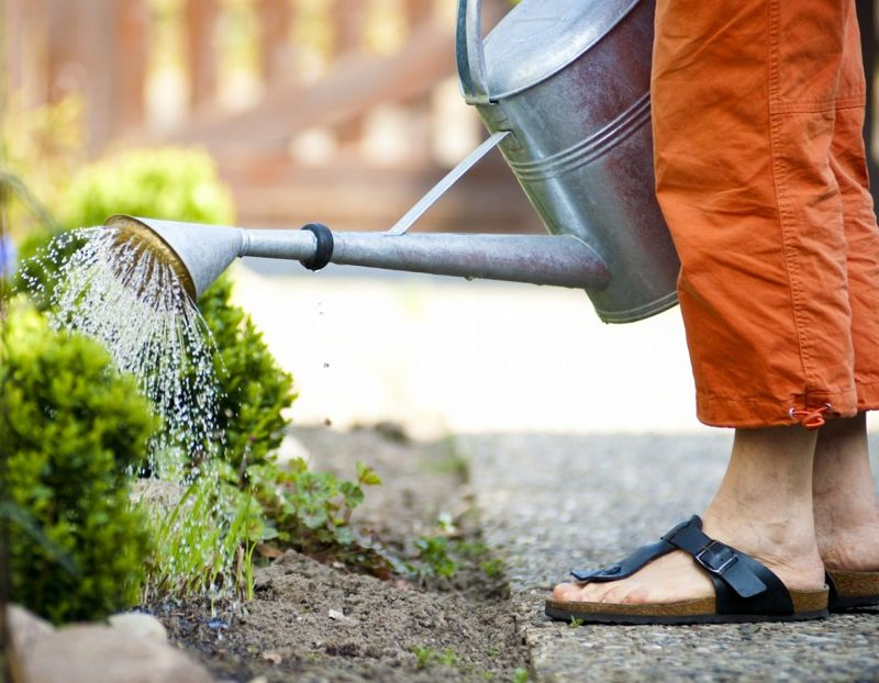 Woman's feet as she waters plant.