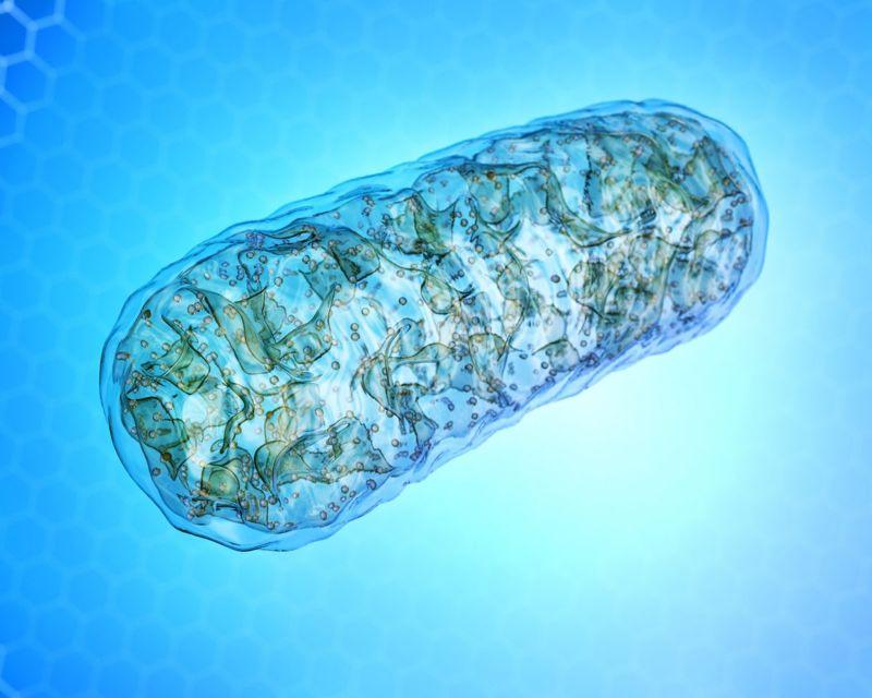 mitochondria cellular energy