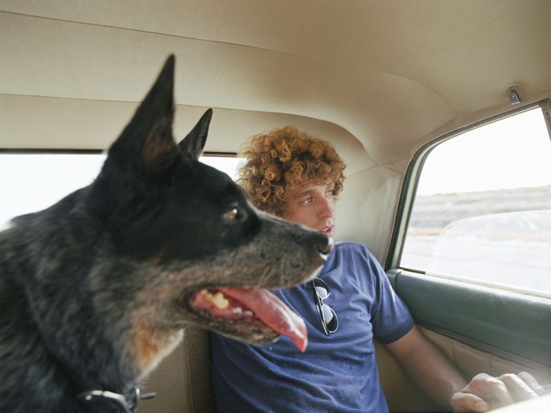 Young man and Blue Heeler sitting in car