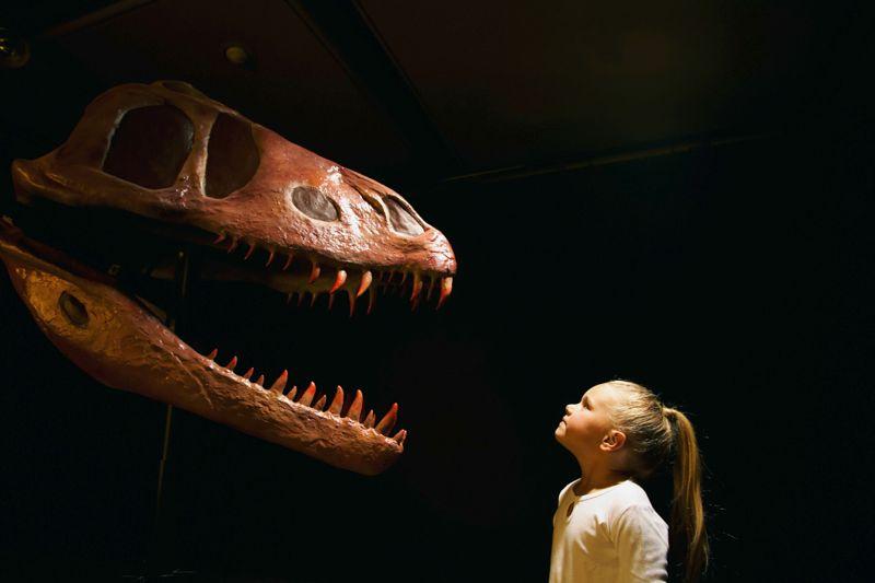 Girl (5-7) looking at dinosaur skull in museum