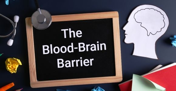 The Role of the Blood-Brain Barrier