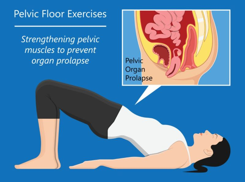 illustrated image of pelvic floor exercises