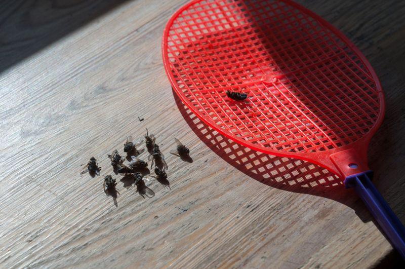 fly swatter beside dead flies