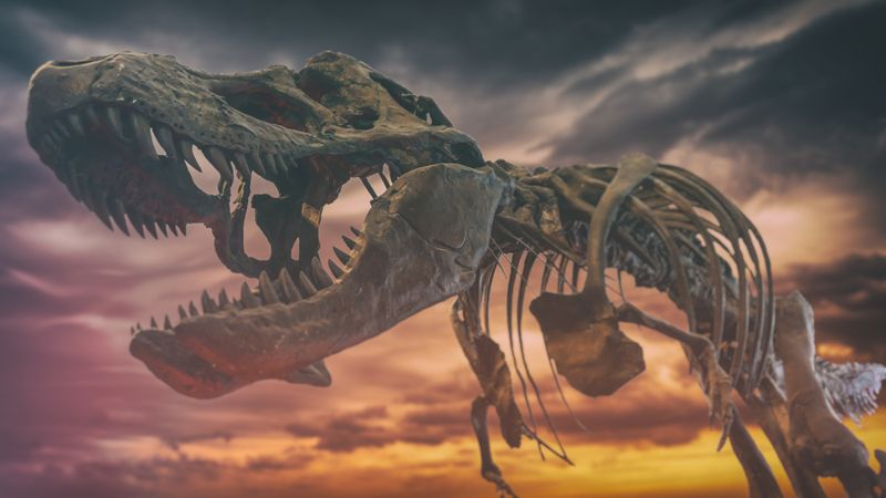 tyrannosaurus rex dinosaur fossil skull against a background of dark gloomy skies, extinction event.