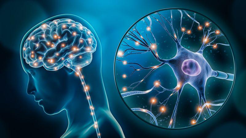 digital illustration of neurotransmitters in the brain