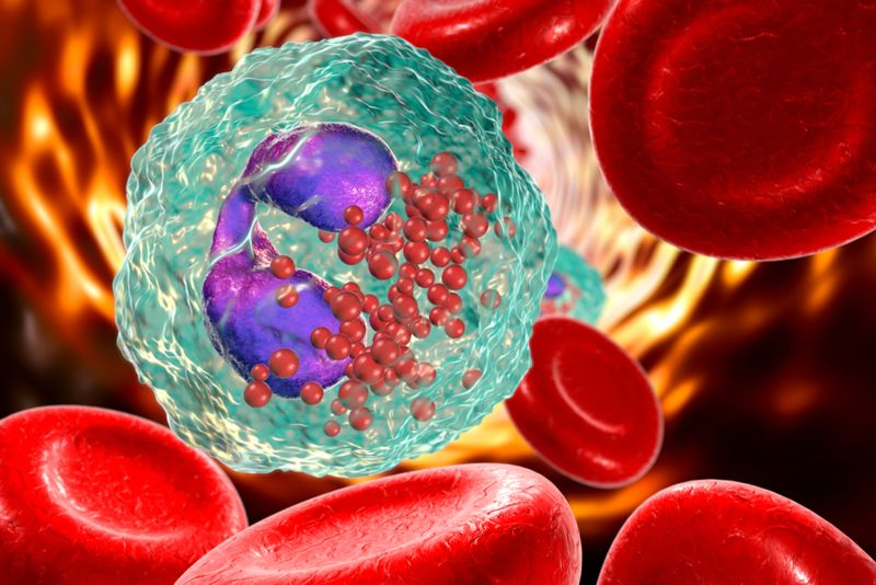 digital illustration of an eosinophil white blood cell among red blood cells