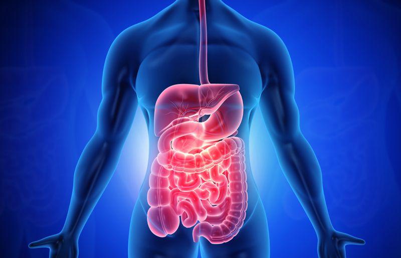 digital illustration of digestive system and intestines