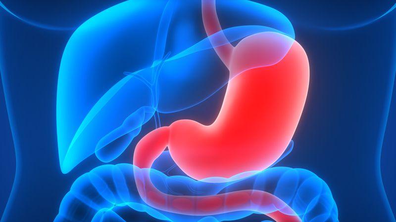 digital rendering of stomach