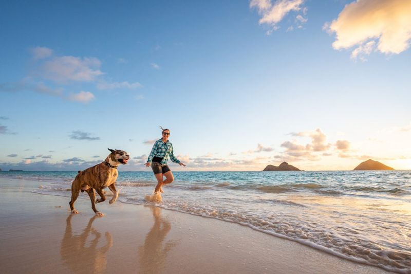 Dog with owner playing on a sunny beach.