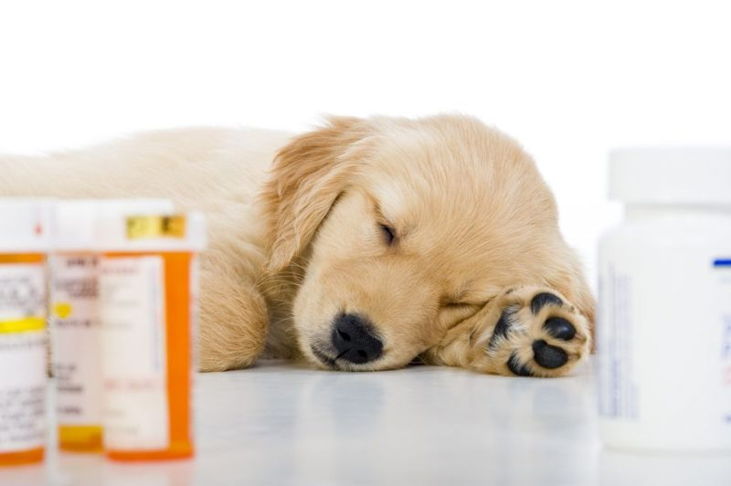 Puppy and medication bottles