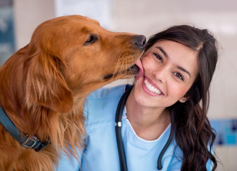 Dog kissing vet