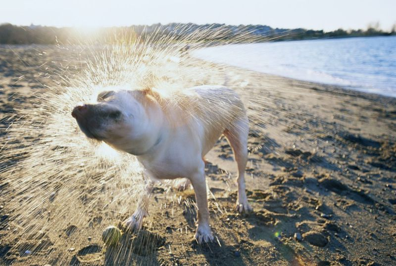 wet dog at the beach