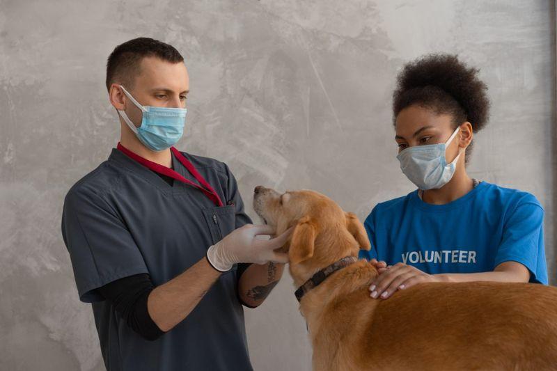 Vets examining a dog