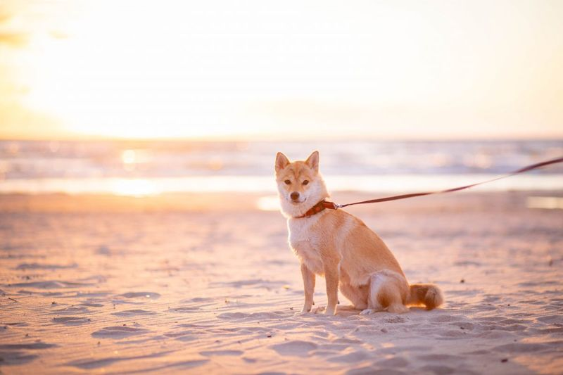 Dog on the beach in the sun