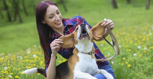 Treating Your Dog for Ear Infections