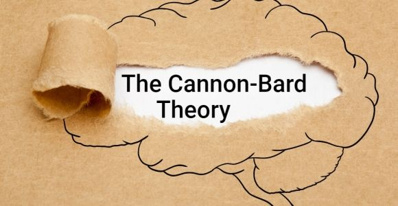 The Cannon-Bard Theory of Emotion