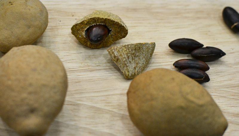 baru nut in the baru fruit