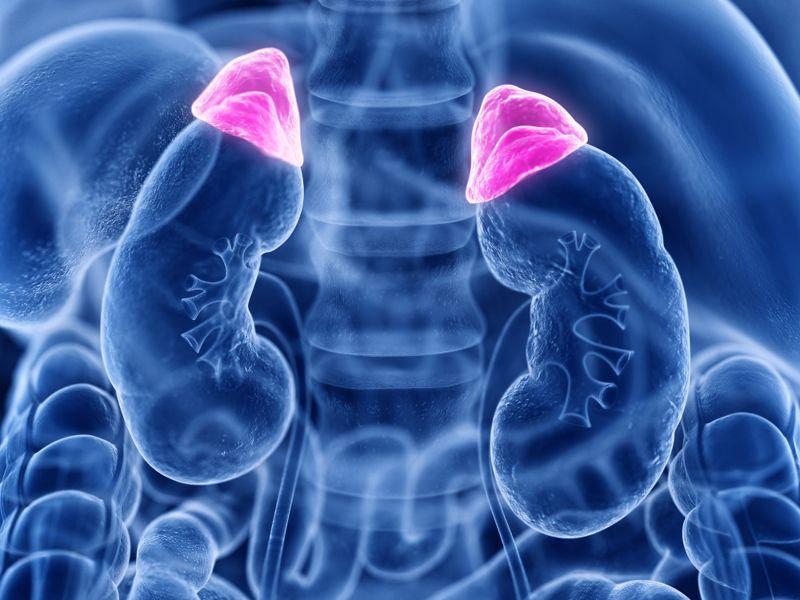 adrenal glands digital illustration