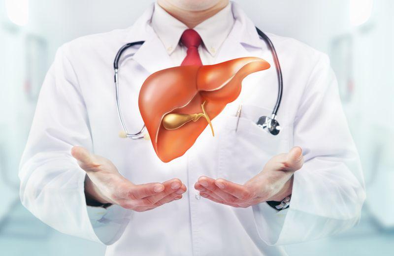 doctor holding up illustration of healthy liver