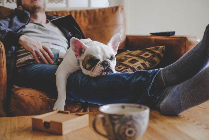 sofa cuddling pet
