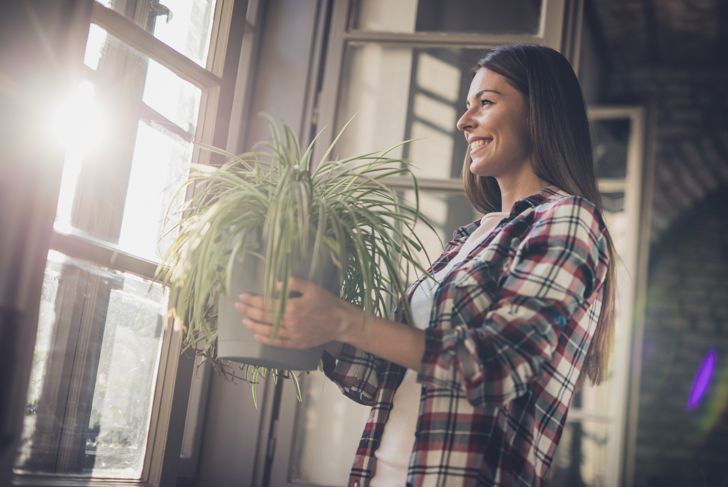 Beautiful woman carrying potted plant to put it on the sunlight by the window.