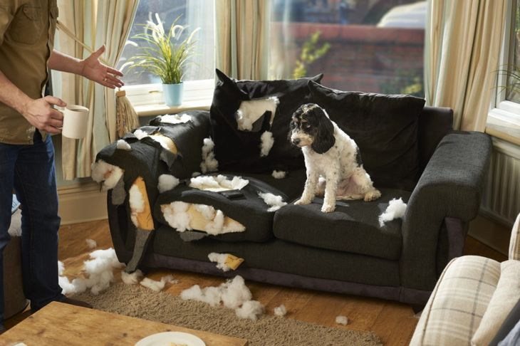 dog destroys couch