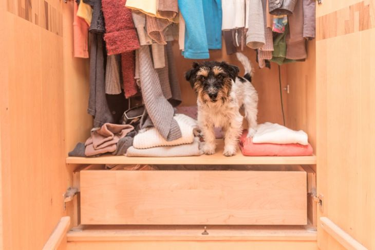 A dog climbing around a wardrobe