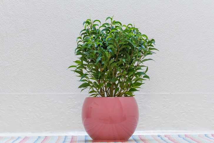 A Small Indoor Plant against White Wall