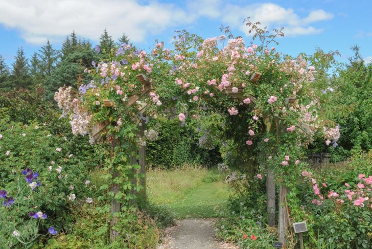 Landscaping ideas rose arch