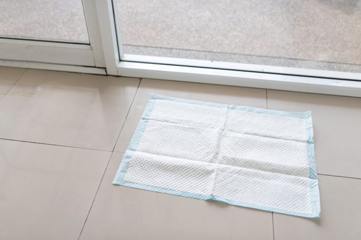 A potty training pad on a tile floor