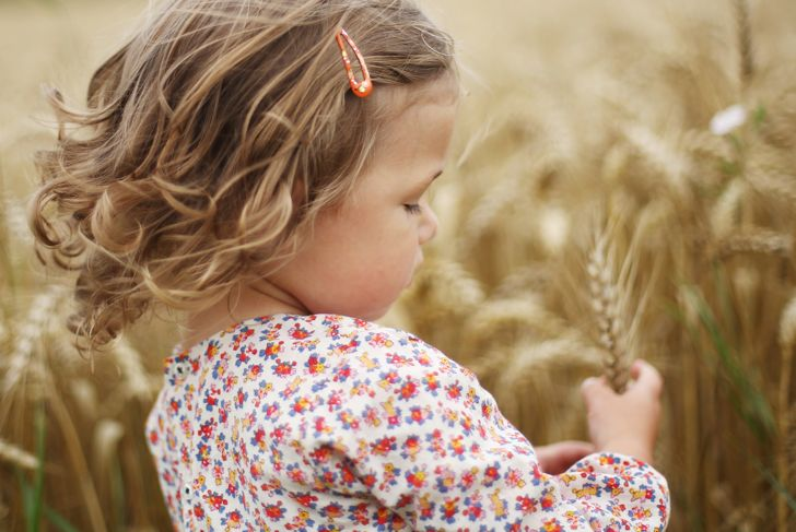 A 2 years old girl gathering ears of wheat