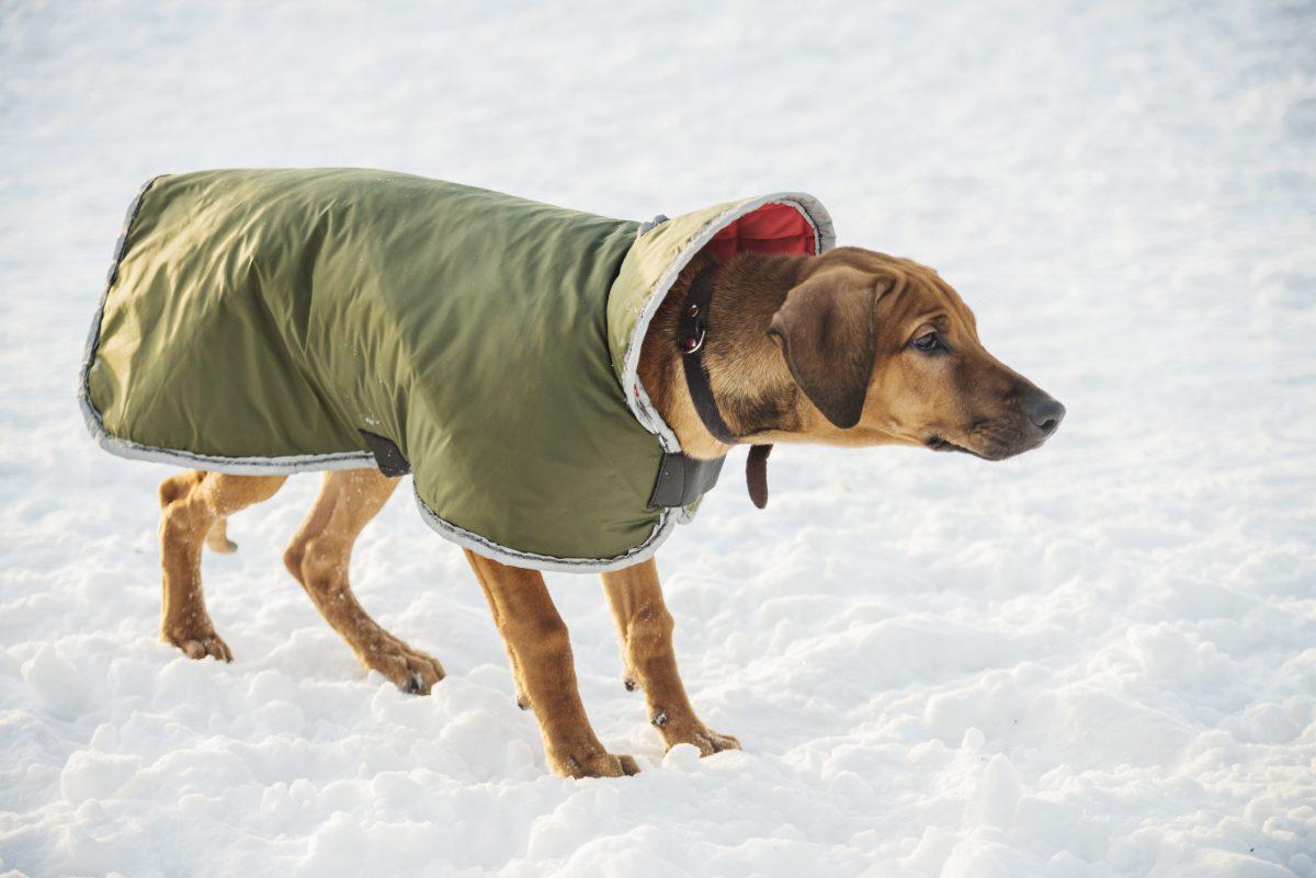 dog coat ruffwear climate changer