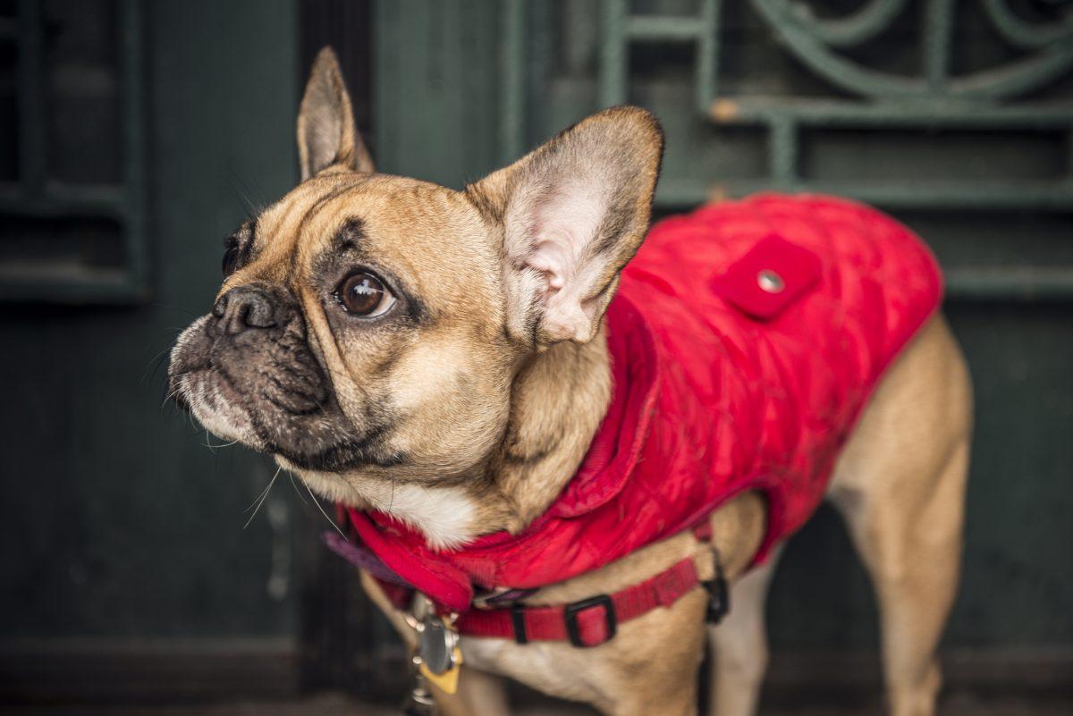 midweight reflective weatherbetta dog parka